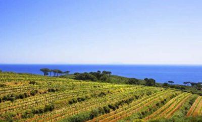 Il Vino dell'Isola d'Elba